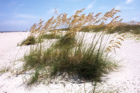 Tybee Island real estate, ripe for the picking