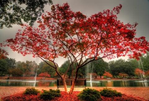 Reflecting pool at USC campus