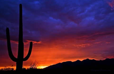 Sunset in Tuscon