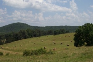 236 Ac Cattle Ranch