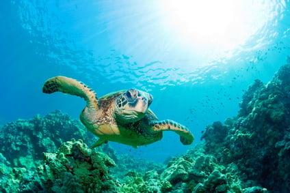 Underwater hotel qatar