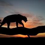 Realtors – Join The Hunt With Jaguar