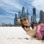 Dubai Real Estate Sales Rise 20% in 2011