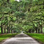 South Carolina Plantations Listed for Sale