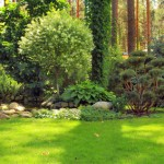 Using Shrubbery to Create a Natural Barrier for your Home