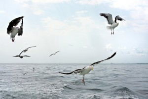 Seagulls on Long Island Sound