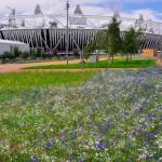 London Gets World's Biggest Urban Meadow