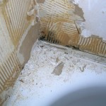 Why You Should Have a Mold Inspection Before Buying a Home