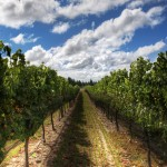 Naples Estate Properties Introduce Vineyard Acquisition Advisory Service
