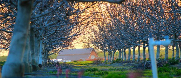 countryside-336709_640