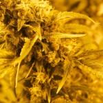 Will Marijuana Turn Denver into The Next San Francisco?