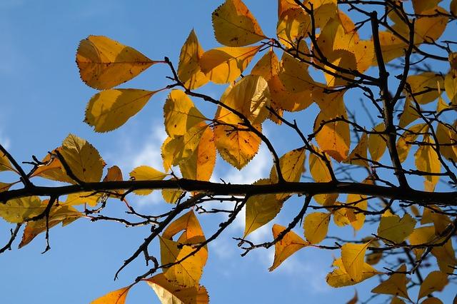 leaves-228140_640