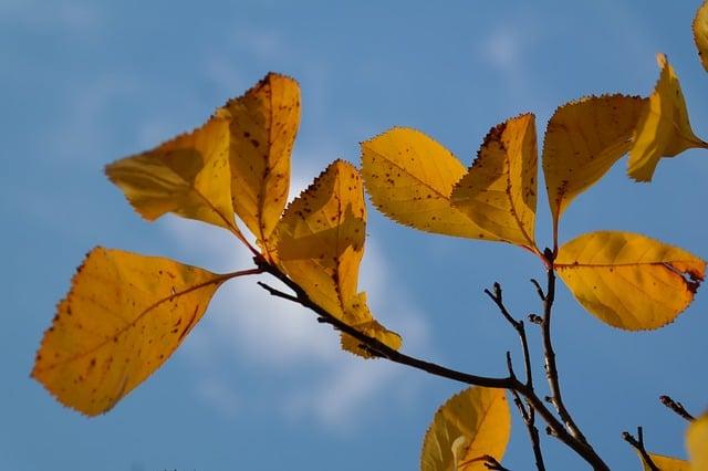 leaves-228138_640
