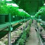 Is marijuana to blame for Denver's housing crisis?