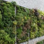 Can Growing Plants on Your Walls Really Benefit Your Property?