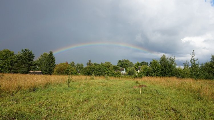 A sign from God? We decided it was, our plot near Pskov