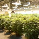 HerbFront is the 1st real estate listings portal for weed growers