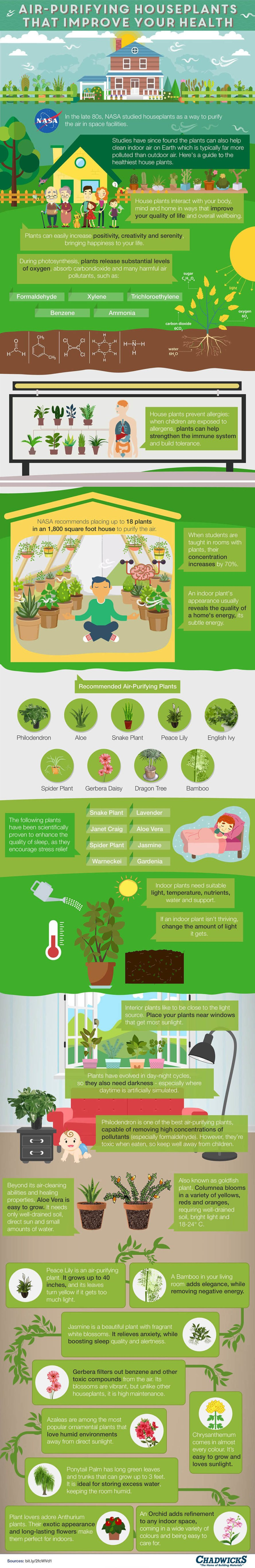 air-purifying-houseplants-infographic-full-889x5446
