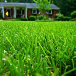 Snow Melting? How to Get Your Yard Ready for Spring