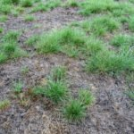 How to solve your Spring Weed Attack