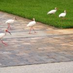 neighborhood birds