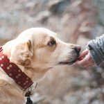 Residential Landlords' Guide to Assistance Animals