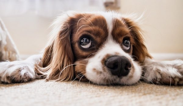 Condo applicants dogged by pet interview requests
