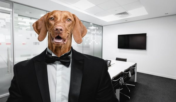 Executives warm to pet-friendly, post-pandemic work spaces