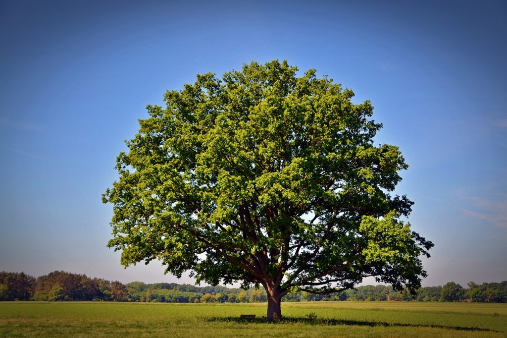 tree 2363456 1280