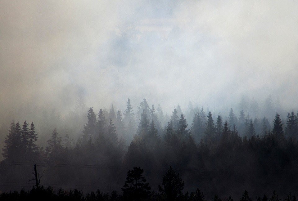 Canadian wildfires could send lumber prices rising again
