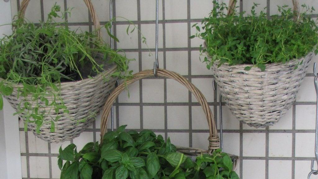 Vertical wall garden with herbs.